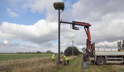 Osprey nesting platform goplasticpallets.com